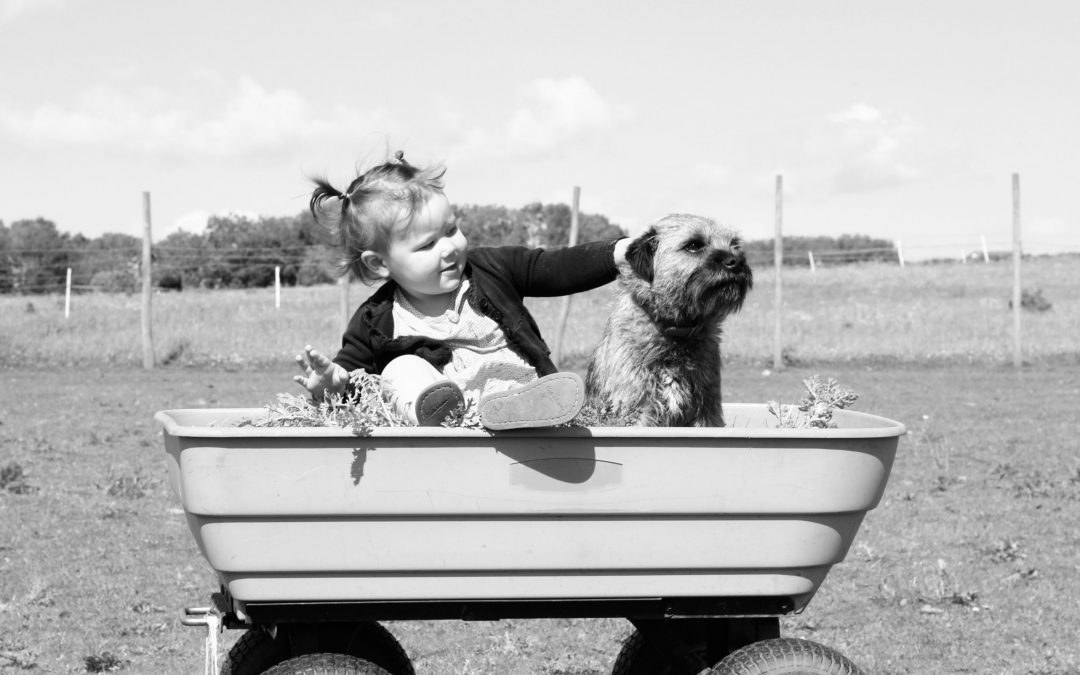 Dogs and babies – what are the risks and how to introduce them safely